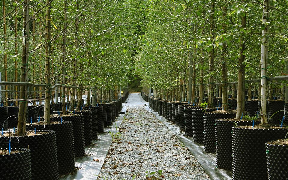 Imagen: Árboles en Air-pot® en Belloch Forestal
